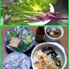 17/05/15の晩ご飯(日野菜飯)