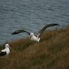 6月19日は世界アルバトロスデー。憧れの海鳥アホウドリ