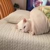 白猫と引越しを本気で考える