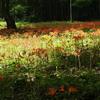 橙色の絨毯
