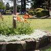 トゥーウンバのお花祭りとブリスベン花火