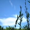 Nikonのデジイチ「D3000」で2017年7月10日までに撮影した写真です。梅雨明けしたような夏空でした【虫注意】