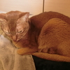 猫ちゃんの寝顔特集❕