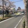 清洲城近辺の桜さいてます