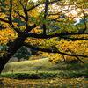 旧芝離宮庭園の紅葉