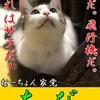 【猫ブログ】むーちょん家 総選挙 no.3 ちび