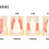 【基礎から学ぶ】腹筋群【解剖学】