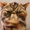 【衝撃!】デブで顔が汚ないお前に何で文句言われなきゃならないの?