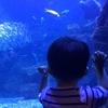 赤ちゃん連れこそ京都水族館!