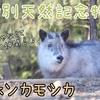 【生き物紹介#7】シカじゃないよ!ニホンカモシカの生態、見られる動物園の紹介
