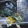 春を感じる花