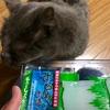 猫の鼻腔内リンパ腫⑮   こんなに元気だよ。