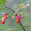里山の秋 桂の甘い香りって知っていますか?