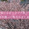 一眼レフで撮影した今年の桜たち。