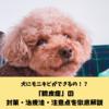 犬にもニキビができる!?「膿皮症」の対策・治療法・対処法