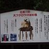 フクロウと不苦労を分かち合う。 ~鷲子山上神社