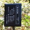 万葉歌碑を訪ねて(その830)―高岡市万葉歴史館四季の庭(3)―万葉集 巻十九 四二〇七
