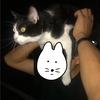【エムPの昨日夢叶(ゆめかな)】第2050回『生きた猫を帽子にしている猫おじさんの正体が暴かれた夢叶なのだ!?』  [10月10日]