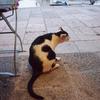 ちょこっとフィンランド&クロアチア旅「ドゥブロヴニク最後の夜を旧港で過ごす!イカ墨リゾットを猫にねだられながら」