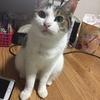 【猫ブログ】奇跡の一枚。 ちび篇