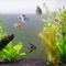 我が家の熱帯魚が増えたので紹介する