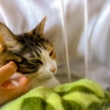 【愛猫日記】毎日アンヌさん#154