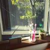 歯ブラシと多肉植物の日光浴、豆腐屋さんまでの落ち着く路地、薄揚げメインの精進料理、松之山温泉の入浴錠。
