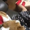 【犬とリンクコーデ】ワンピースとTシャツ