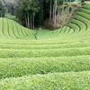 【d:matchaのこと】9月の新企画!茶畑ハイキングと茶摘み体験がセットのプランが登場!