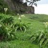 小雨模様の牛臥山公園と、夏を彩る海辺のお花