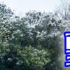 雪雪雪雪雪!~愛知県でも雪が降ったよ!!~そして寒い