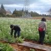 4月1日の援農作業