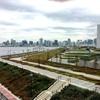 豊洲新市場に隣接する公園の運命