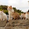 公益財団法人どうぶつ基金は『猫島』として知られる青島で全ての猫への不妊去勢手術を9月5・6日に行うと発表!猫の将来を考えると素晴らしい決断!!