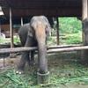 チェンマイカフェ巡りの旅⑤ 象と首長族に会って思ったこと