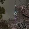 夜桜 第2回目