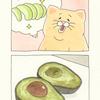 ネコノヒー「アボカド」/avocado
