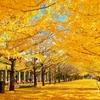 読書の秋?いや、ブログの秋!