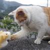 【台北から猫村の猴硐(ホウトン)へ】ニャー助、台湾の猫たちと触れ合う