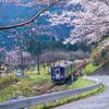 桜風景・関西本線【本番】(3/27)