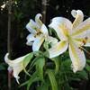 華麗な夏の野の花