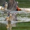 【(*´∀`)行ってきた】水鳥の楽園 谷津干潟で鳥の写真を撮って、あとからGoogle レンズで調べてみた!