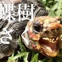 蝶樹の浅海人奇譚