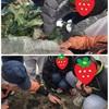 放課後デイ 専用農園で農作業体験