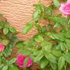 初秋の開花…5