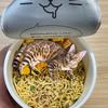 【合成動画がすごい!!】ヒョウ柄の猫 ぱるちゃんを紹介するにゃ