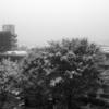 313. 11月の雪