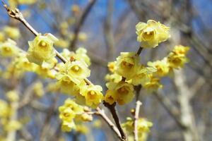 【雑学】自然観察指導員の徒然草=寒い冬でも花は楽しめる~前編