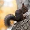 秋色パレット 君に逢いに森へ。
