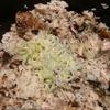 超簡単 ダッチオーブンで鶏ご飯